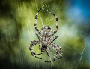 Spinnenphobie bei der SOB